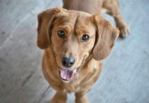 Puszki dla psów